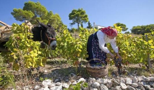 Mjesec dana vinskog hedonizma na Pelješcu