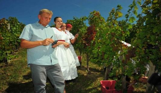 Svi u vinograd